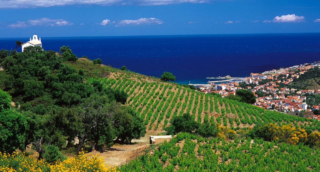 Vignoble méditerranéen